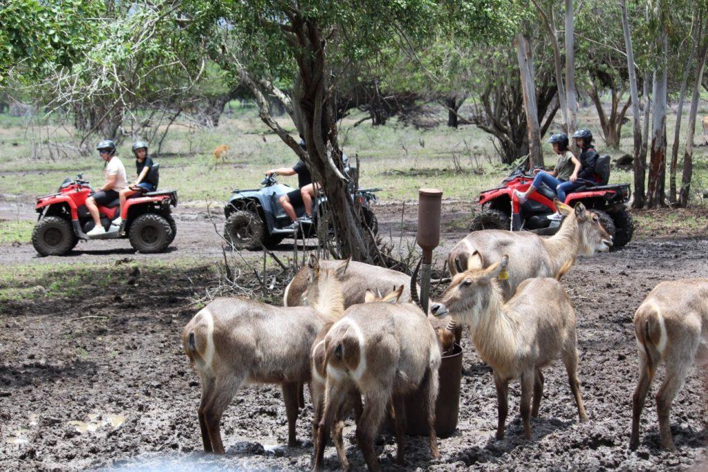 Dirt Biking among animals