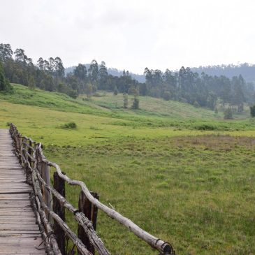 A Road Trip to Kodaikanal - The Princess of Hill Stations 1